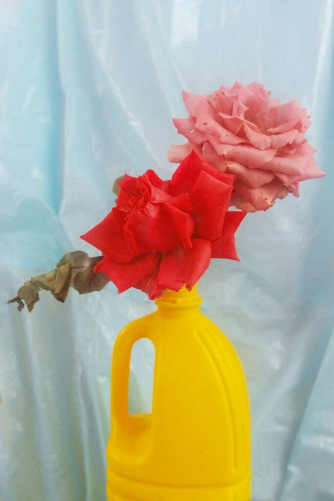 fotografia rosas bodegon